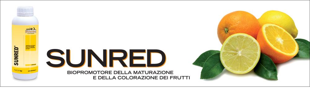 SUNRED<sup>®</sup>: migliore colorazione e uniformità di maturazione negli agrumi