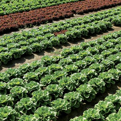 Fucino: Azienda Agricola Cambise e Biolchim insieme per la qualità