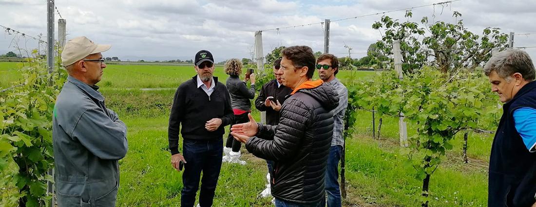 Dall'Australia all'Italia: una rete di successi agronomici